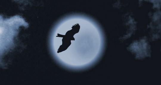 """""""Ночная птица"""" (К.Никольский), аккорды!"""