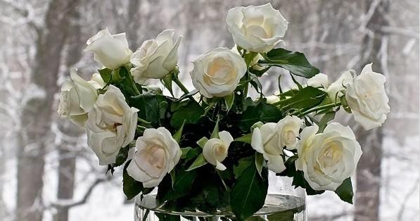 """""""Белые розы"""", аккорды"""
