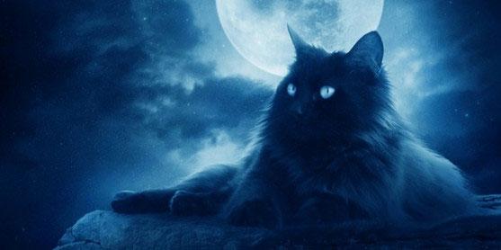 Черный кот - Браво - аккорды