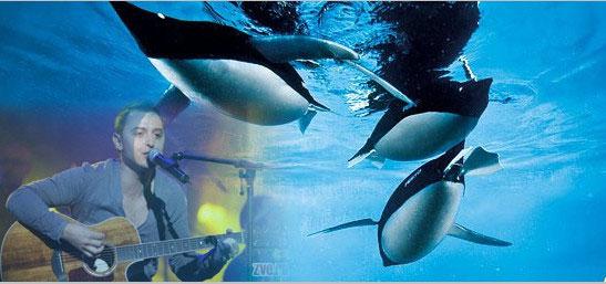 Пингвины - Звери - Аккорды
