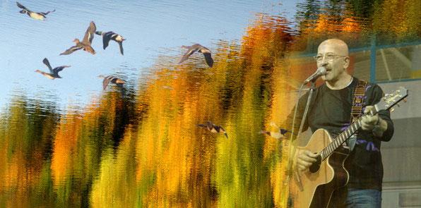 Утиная охота - Розенбаум - Аккорды